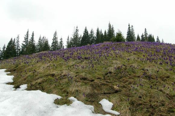 Фото Драгобрата цветы и снег